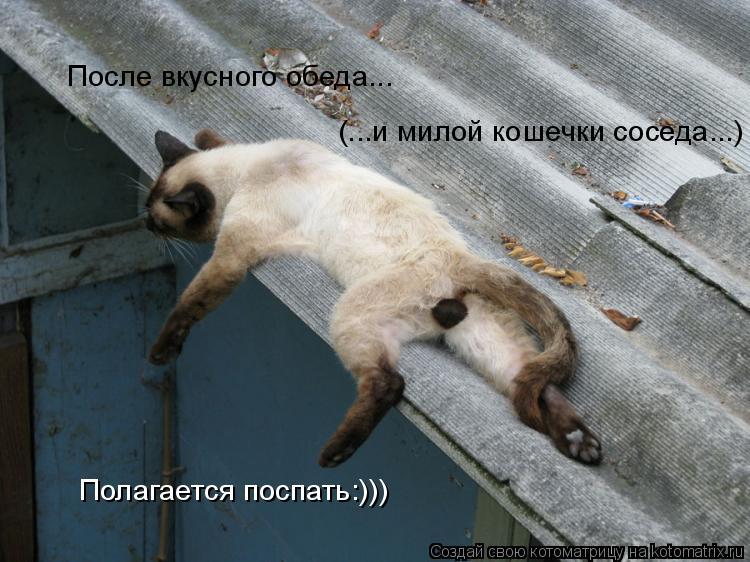Котоматрица: После вкусного обеда... (...и милой кошечки соседа...) Полагается поспать:)))
