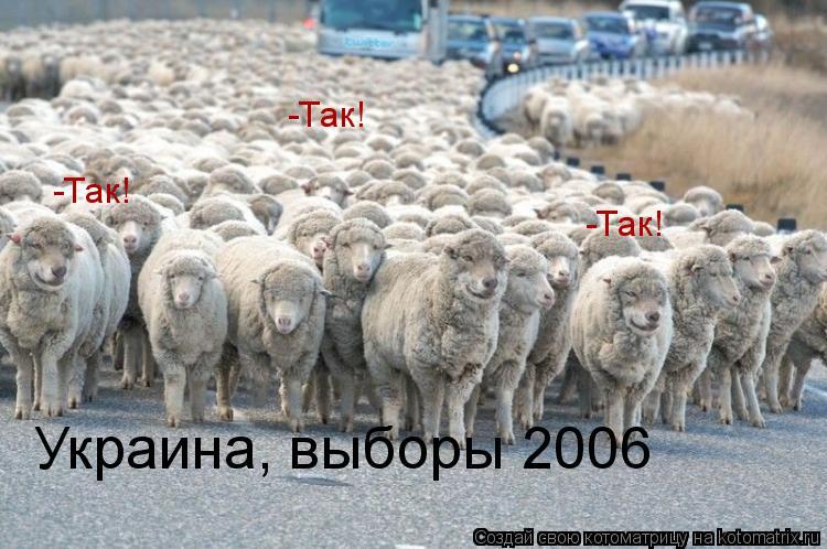 Котоматрица: Украина, выборы 2006 -Так! -Так! -Так! -Так!