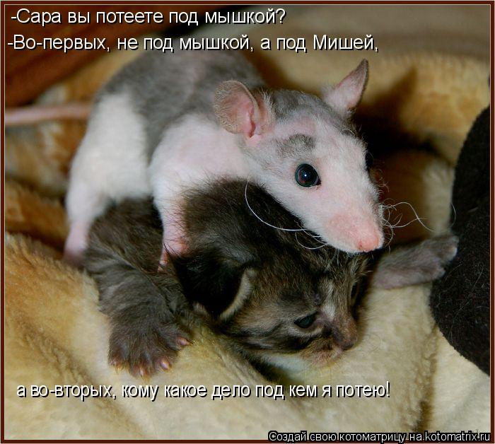Котоматрица: -Сара вы потеете под мышкой? -Во-первых, не под мышкой, а под Мишей, а во-вторых, кому какое дело под кем я потею!