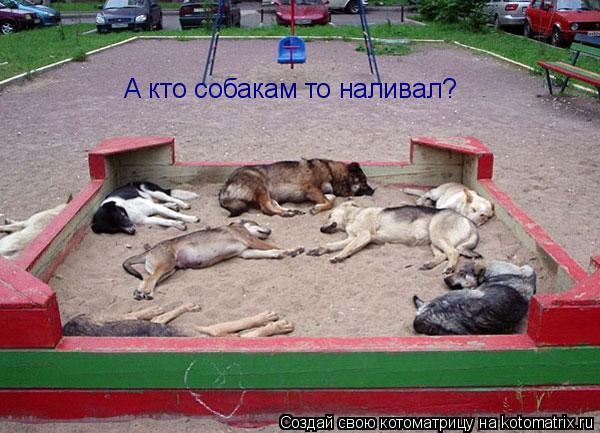 Котоматрица: А кто собакам то наливал?