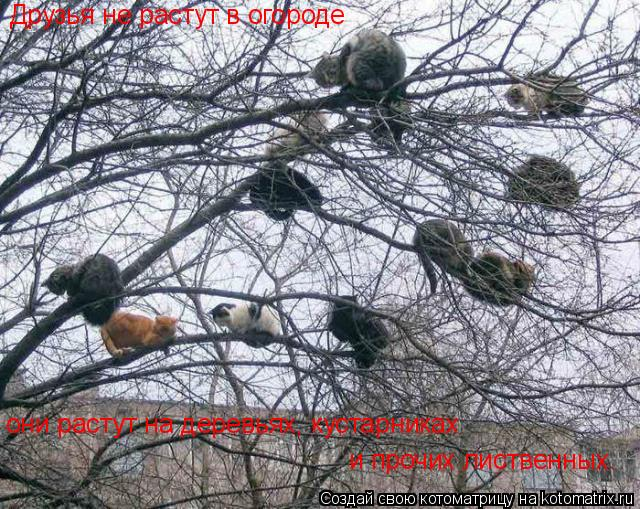 Котоматрица: Друзья не растут в огороде они растут на деревьях, кустарниках и прочих лиственных.