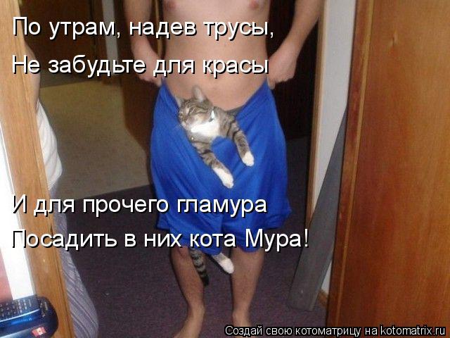 Котоматрица: По утрам, надев трусы, Не забудьте для красы И для прочего гламура Посадить в них кота Мура!