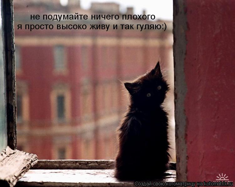Котоматрица: не подумайте ничего плохого  я просто высоко живу и так гуляю:)