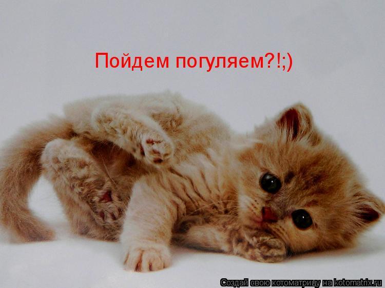 Котоматрица: Пойдем погуляем?!;)