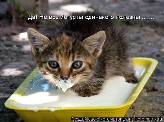 Котоматрица: Да! Не все йогурты одинакого полезны .......