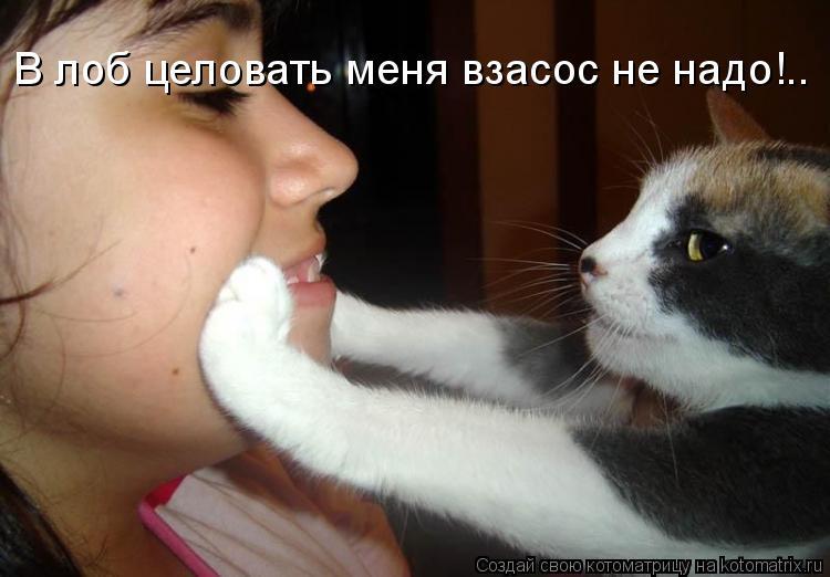 Котоматрица: В лоб целовать меня взасос не надо!..