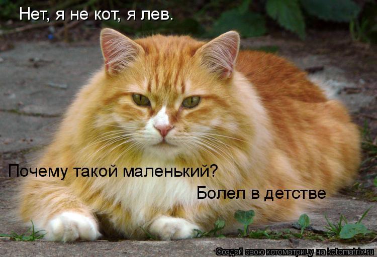 Котоматрица: Нет, я не кот, я лев. Почему такой маленький? Болел в детстве