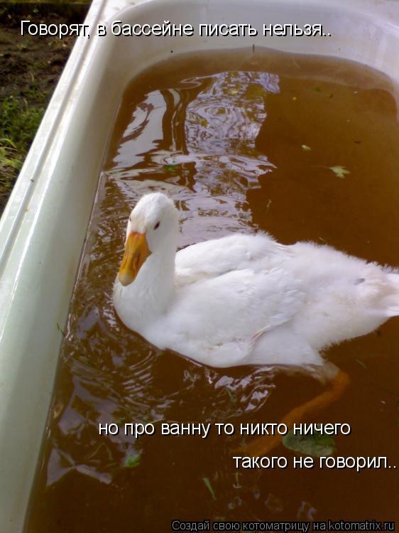 Котоматрица: Говорят, в бассейне писать нельзя.. но про ванну то никто ничего  такого не говорил..
