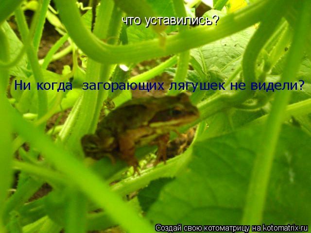 Котоматрица: что уставились?  что уставились?  Ни когда  загорающих лягушек не видели?