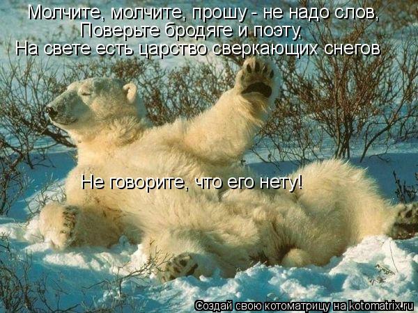 Котоматрица: Молчите, молчите, прошу - не надо слов, Поверьте бродяге и поэту, На свете есть царство сверкающих снегов Не говорите, что его нету!