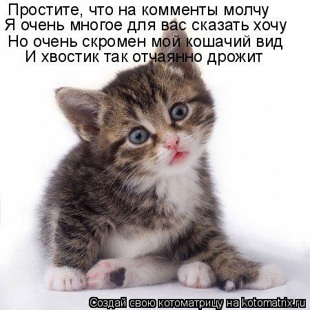 Котоматрица: Простите, что на комменты молчу Я очень многое для вас сказать хочу Но очень скромен мой кошачий вид И хвостик так отчаянно дрожит