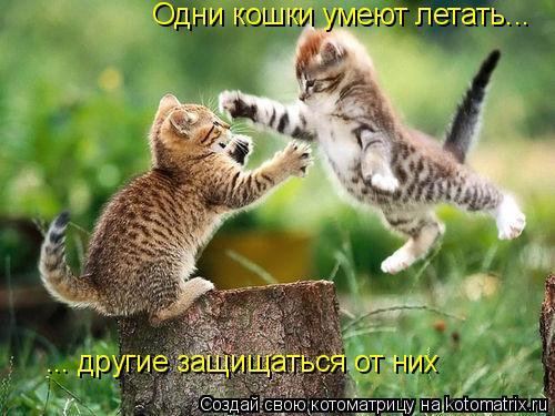 Котоматрица: Одни кошки умеют летать... ... другие защищаться от них