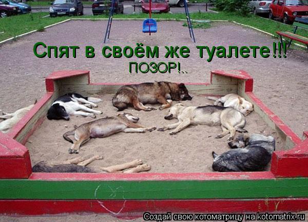 Котоматрица: Спят в своём же туалете!!! ПОЗОР!..