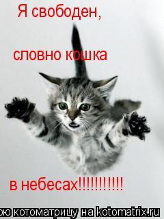 Котоматрица: словно кошка в небесах!!!!!!!!!!! Я свободен,
