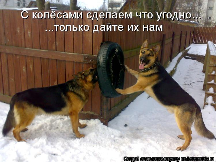 Котоматрица: С колёсами сделаем что угодно... ...только дайте их нам