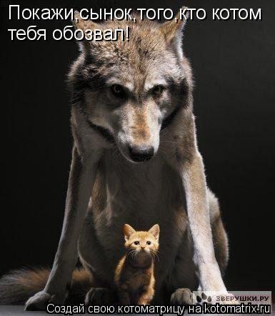 Котоматрица: Покажи,сынок,того,кто котом  тебя обозвал!