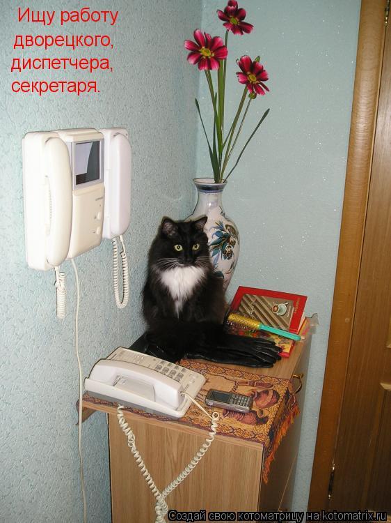 Котоматрица: Ищу работу дворецкого, диспетчера, секретаря.