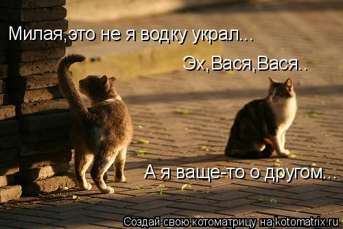 Котоматрица: Эх,Вася,Вася.. Милая,это не я водку украл... А я ваще-то о другом...