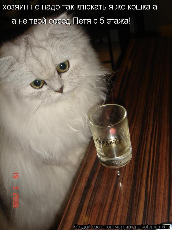 Котоматрица: хозяин не надо так клюкать я же кошка а а не твой сосед Петя с 5 этажа!