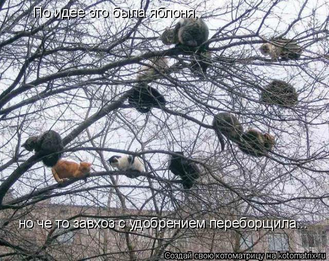 Котоматрица: По идее это была яблоня, но че то завхоз с удобрением переборщила...