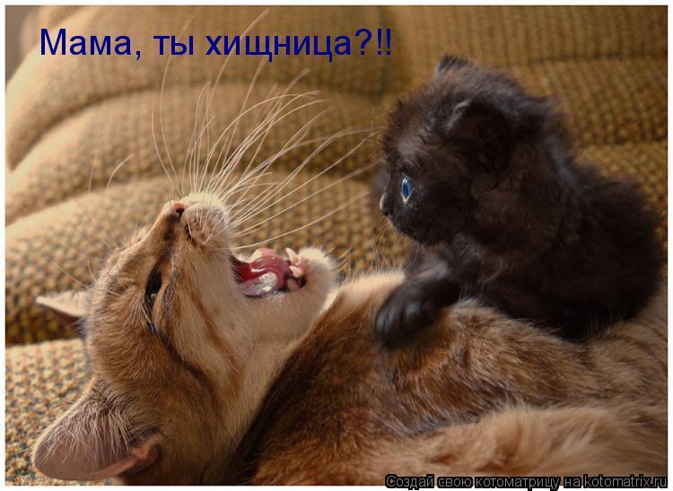 Котоматрица: Мама, ты хищница?!!