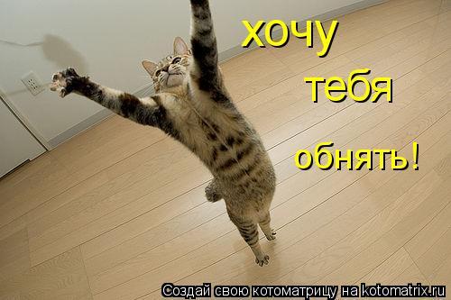 Котоматрица: хочу тебя обнять!