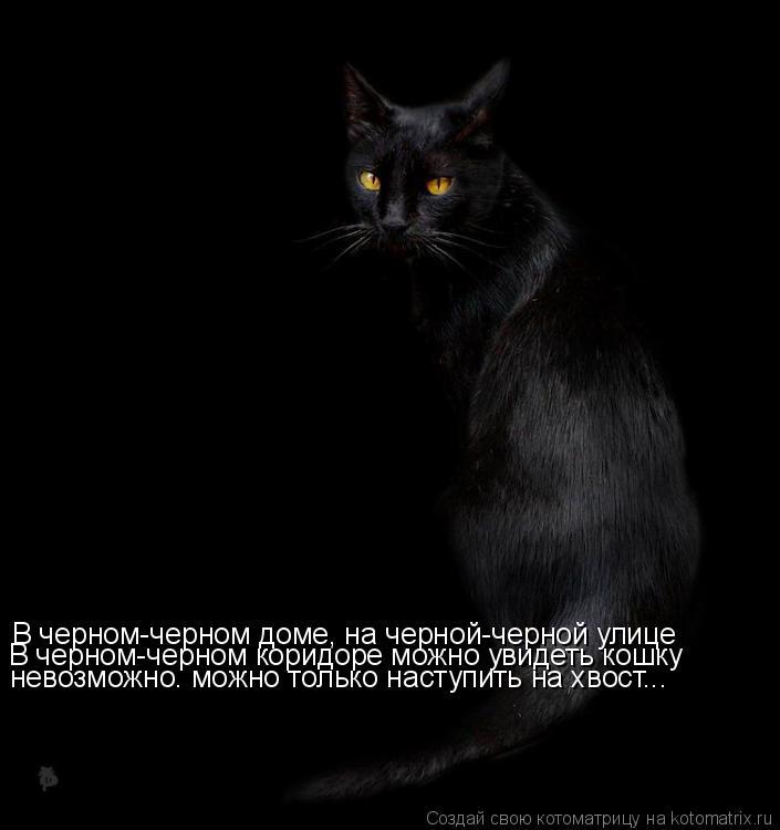 Котоматрица: В черном-черном доме, на черной-черной улице В черном-черном коридоре можно увидеть кошку  невозможно. можно только наступить на хвост...