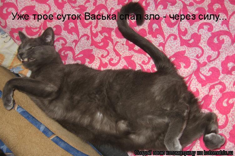 Котоматрица: Уже трое суток Васька спал зло - через силу...