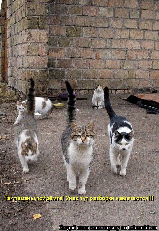 Котоматрица: Так,пацаны,пойдёмте! Унас тут разборки намечаются!!!