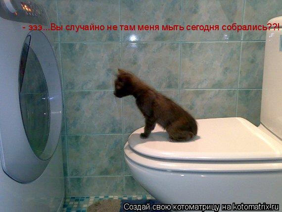 Котоматрица: - эээ...Вы случайно не там меня мыть сегодня собрались??!