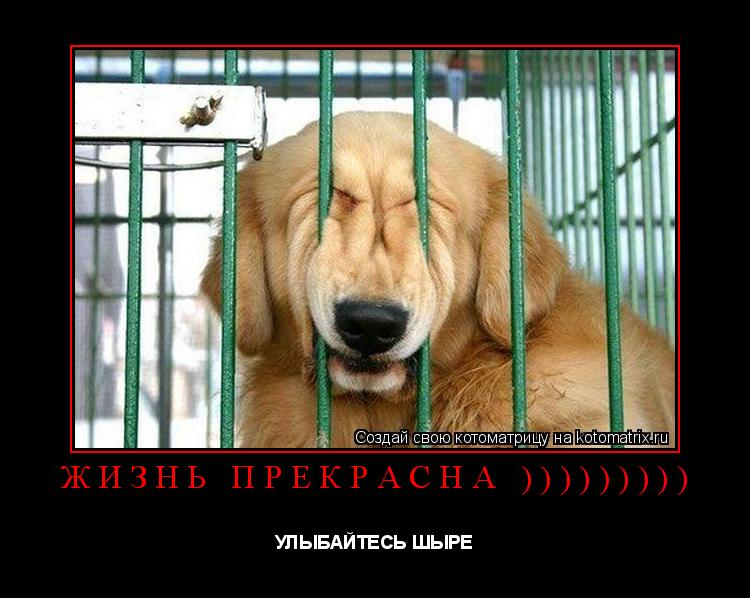 Котоматрица: ЖИЗНЬ ПРЕКРАСНА ))))))))) УЛЫБАЙТЕСЬ ШЫРЕ