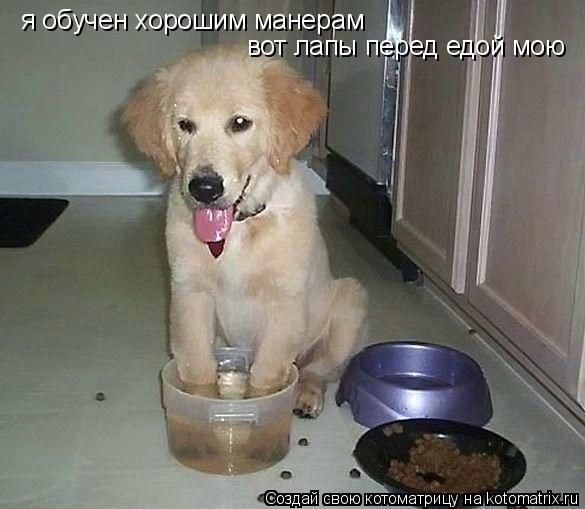 Котоматрица: я обучен хорошим манерам вот лапы перед едой мою