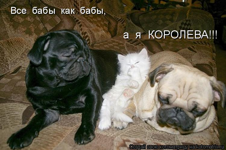 Котоматрица: Все  бабы  как  бабы, а  я  КОРОЛЕВА!!!