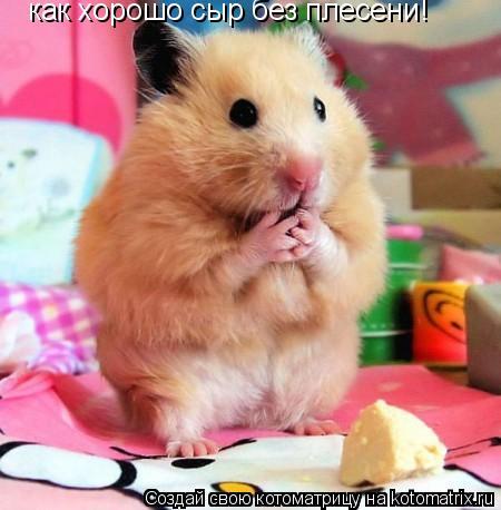 Котоматрица: Так  хозяйку прогнал теперь  как хорошо сыр без плесени!