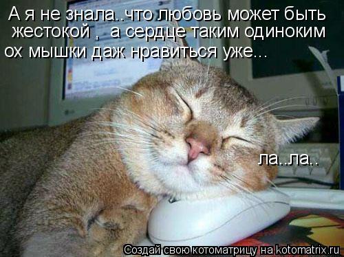 Котоматрица: А я не знала..что любовь может быть  жестокой ,  а сердце таким одиноким ох мышки даж нравиться уже... ла..ла..