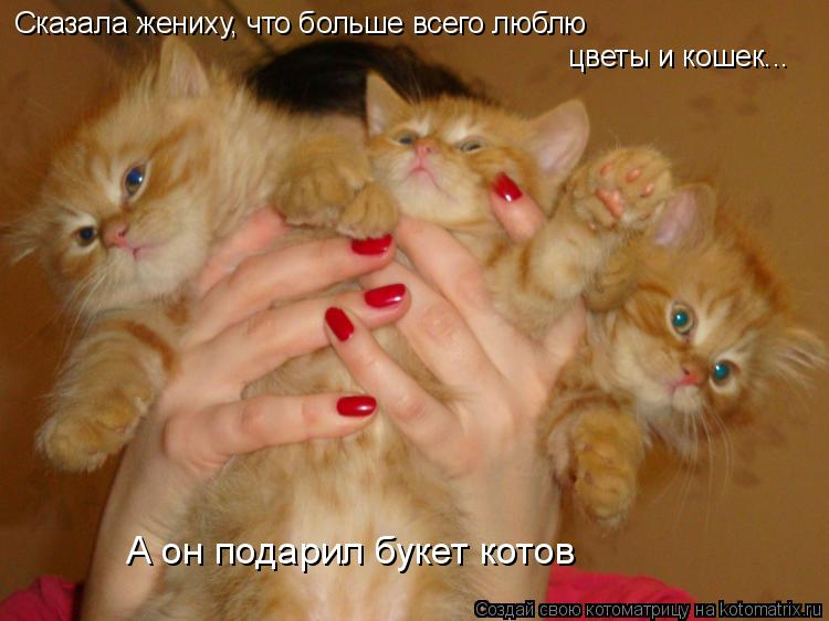 Котоматрица: Сказала жениху, что больше всего люблю цветы и кошек... А он подарил букет котов