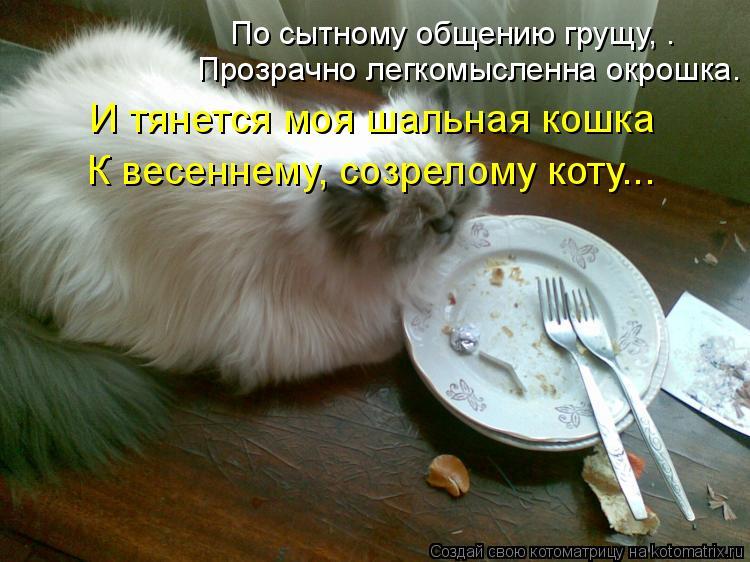 Котоматрица: По сытному общению грущу, – Прозрачно легкомысленна окрошка. И тянется моя шальная кошка К весеннему, созрелому коту...