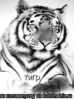 Котоматрица: тигр