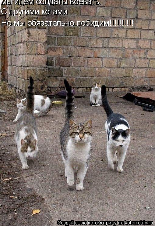 Котоматрица: мы идём солдаты воевать. С другими котами  Но мы обязательно побидим!!!!!!!!!!