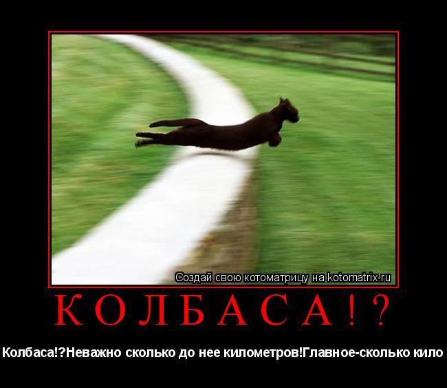 Котоматрица: Колбаса!? Колбаса!?Неважно сколько до нее километров!Главное-сколько кило
