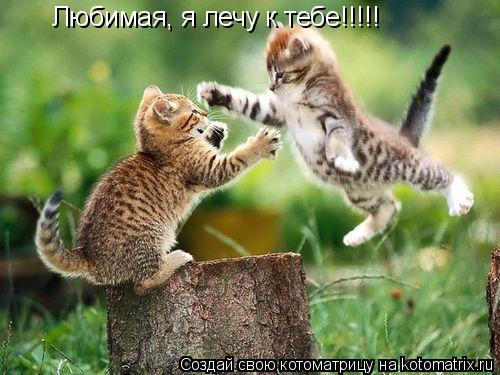 Котоматрица: Любимая, я лечу к тебе!!!!!