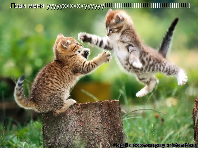 Котоматрица: Лови меня уууууххххххуууууу!!!!!!!!!!!!!!!!!!!!!!!!!!!!!!!!!!!!!!!!!