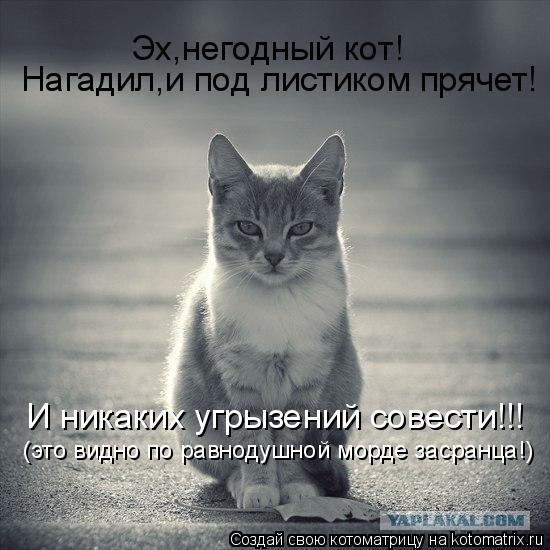 Котоматрица: Эх,негодный кот! Нагадил,и под листиком прячет! И никаких угрызений совести!!! (это видно по равнодушной морде засранца!)