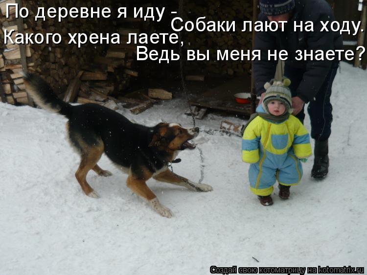 Котоматрица: По деревне я иду - Собаки лают на ходу.  Какого хрена лаете,  Ведь вы меня не знаете?