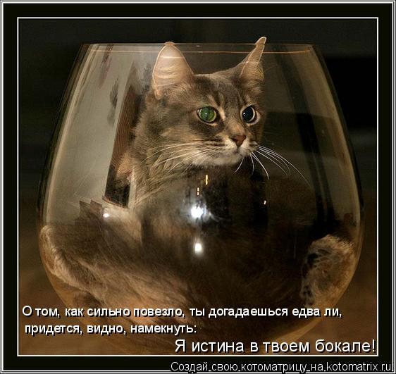 Котоматрица: придется, видно, намекнуть: О том, как сильно повезло, ты догадаешься едва ли, Я истина в твоем бокале!