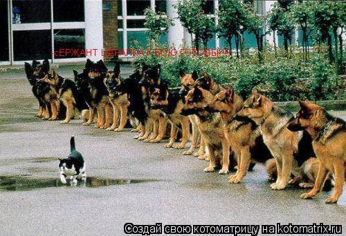 Котоматрица: -сЕРЖАНТ ЦАРАПКА К БОЮ ГОТОВЫ!!!!
