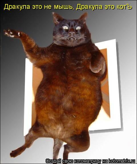 Котоматрица: Дракула это не мышь, Дракула это котЪ