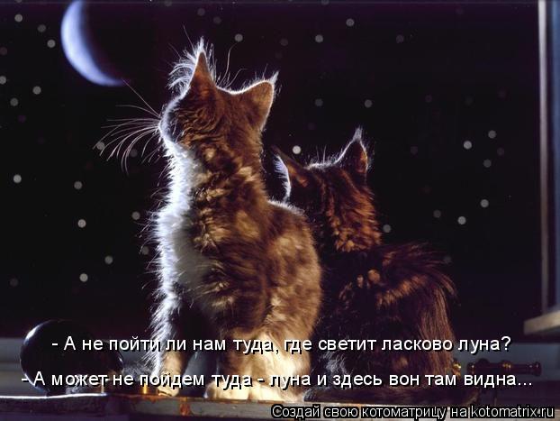 Котоматрица: - А не пойти ли нам туда, где светит ласково луна? - А может не пойдем туда - луна и здесь вон там видна...