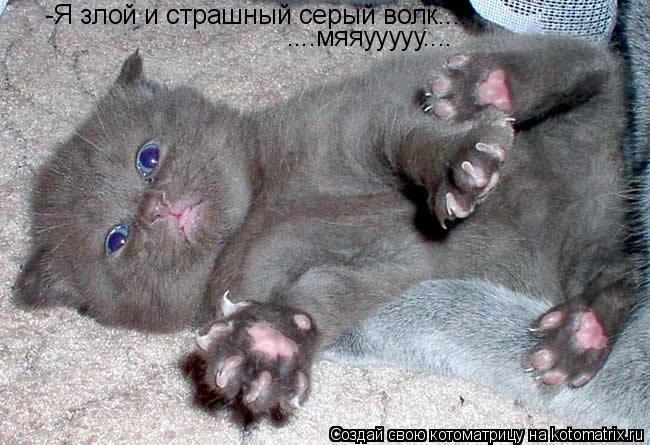 Котоматрица: -Я злой и страшный серый волк.... ....мяяууууу....