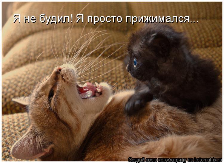 Котоматрица: Я не будил! Я просто прижимался...